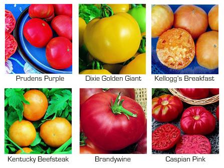 Gardendesk Heirloom Tomatoes For 2008