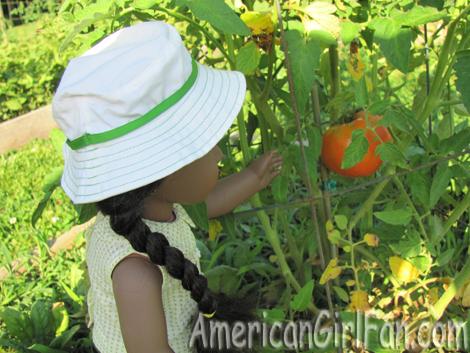 Picking the tomato