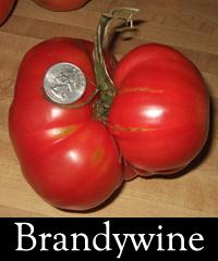 BrandywineExample