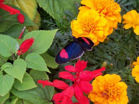 Butterflies_Flowers_4