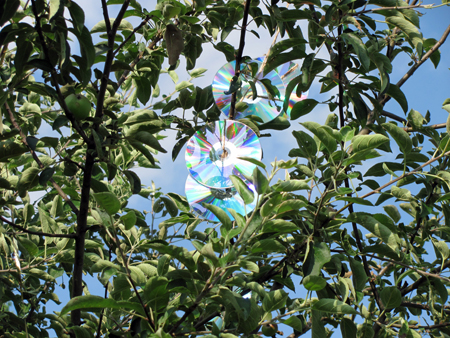 CD Apple Tree2