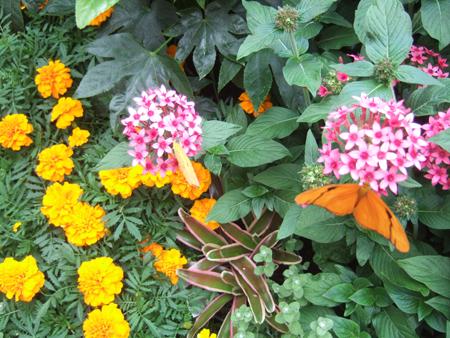 Butterflies_Flowers_2