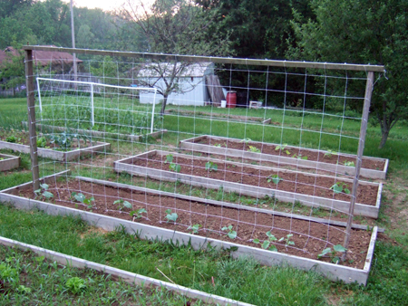 Trellis for Cucumbers 2