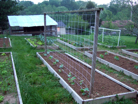 Trellis for Cucumbers