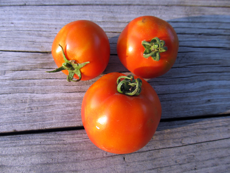 4th of July Tomatoes 3