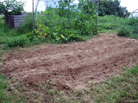 Planting_Beans_3
