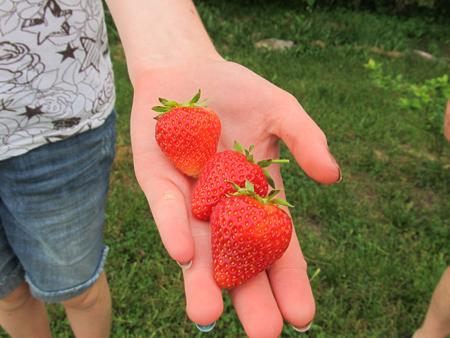 Handfull of Strawberries