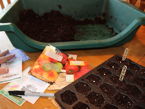 Potting Tray Planting Seeds