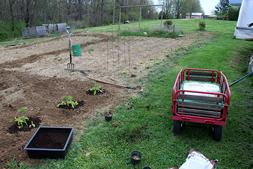 Planting_Early_Tomatoes_Wide