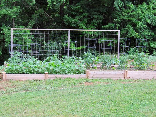 Garden_June_2