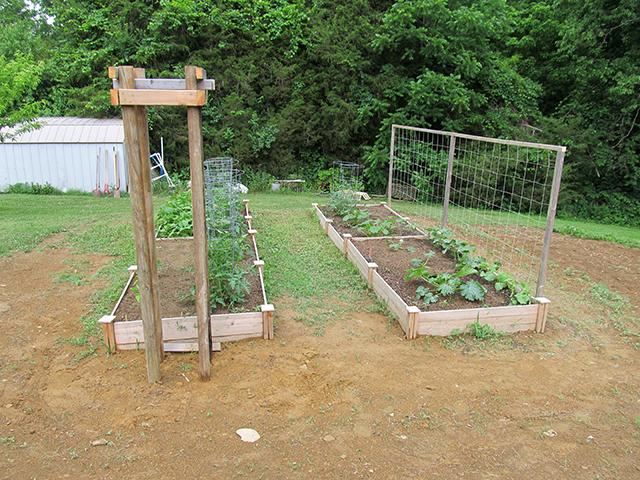Garden_June_3