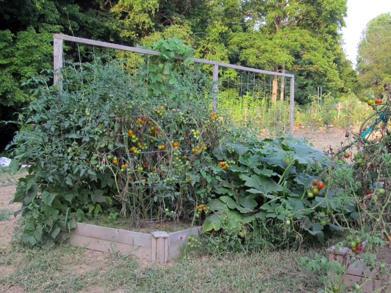 Raised_Beb_Garden-Aug2014_1