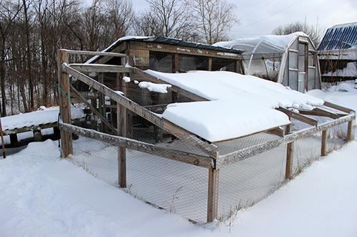 Snow_Coop_2