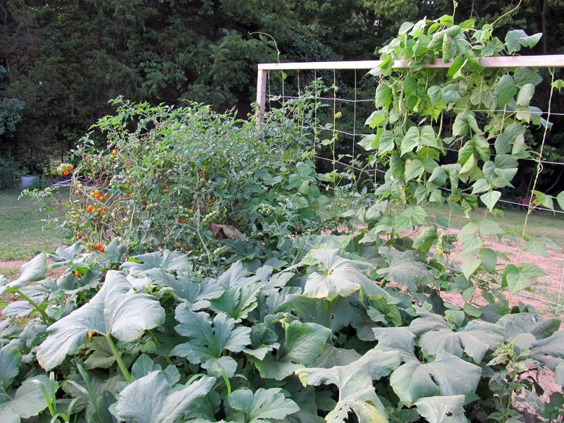 Raised_Beb_Garden-Aug2014_2