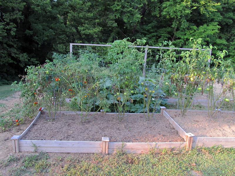 Raised_Beb_Garden-Aug2014_4